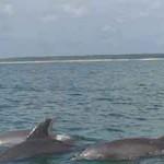 Marshwalk Water Sports Dolphin Pod